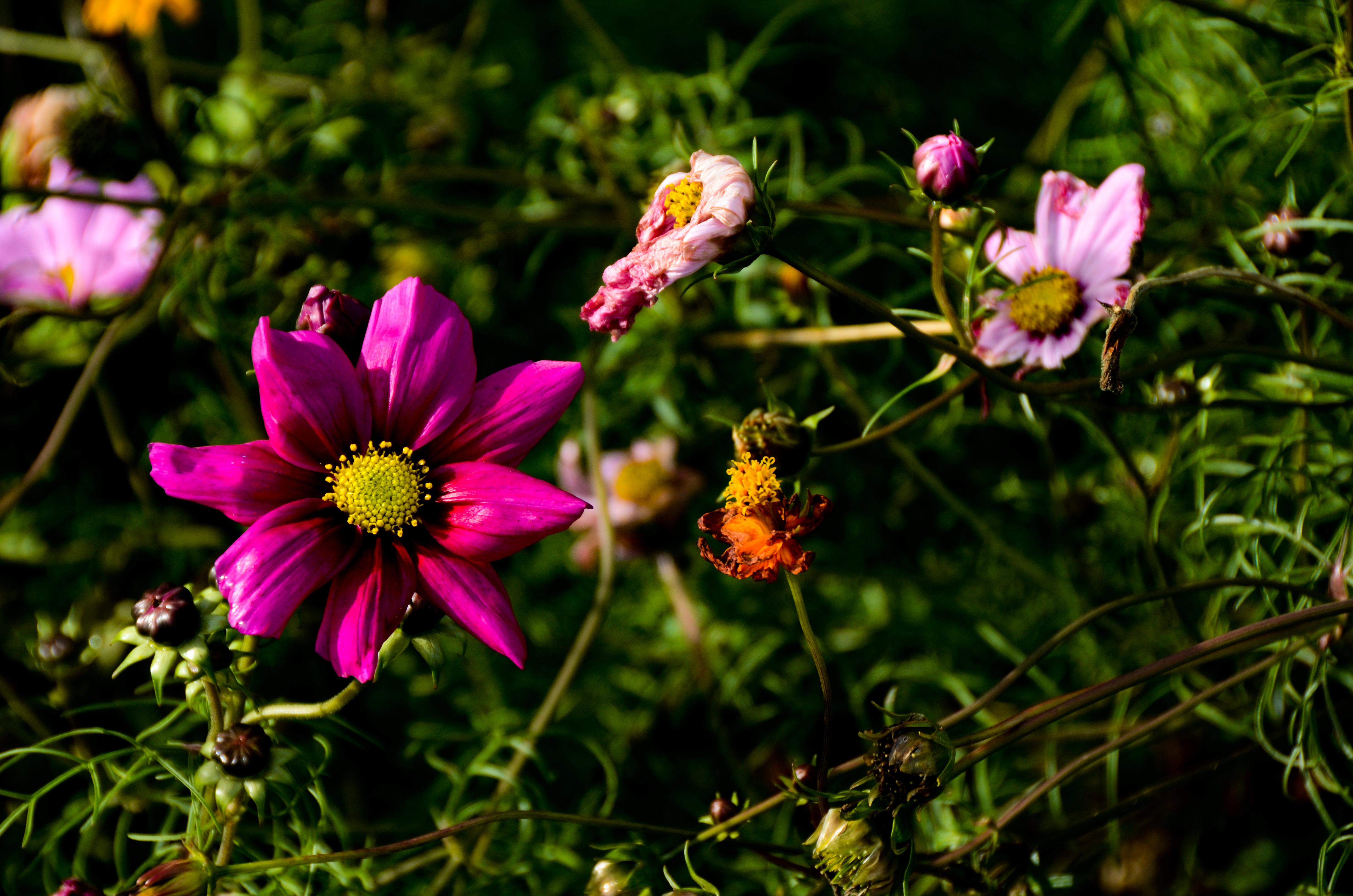 Flowery Contrast