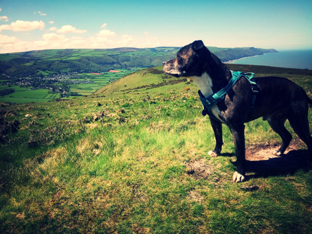 The Importance Of Canine Exercise - Part 1