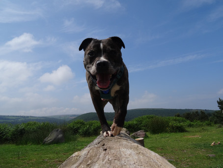 The Importance Of Canine Exercise - Part 2