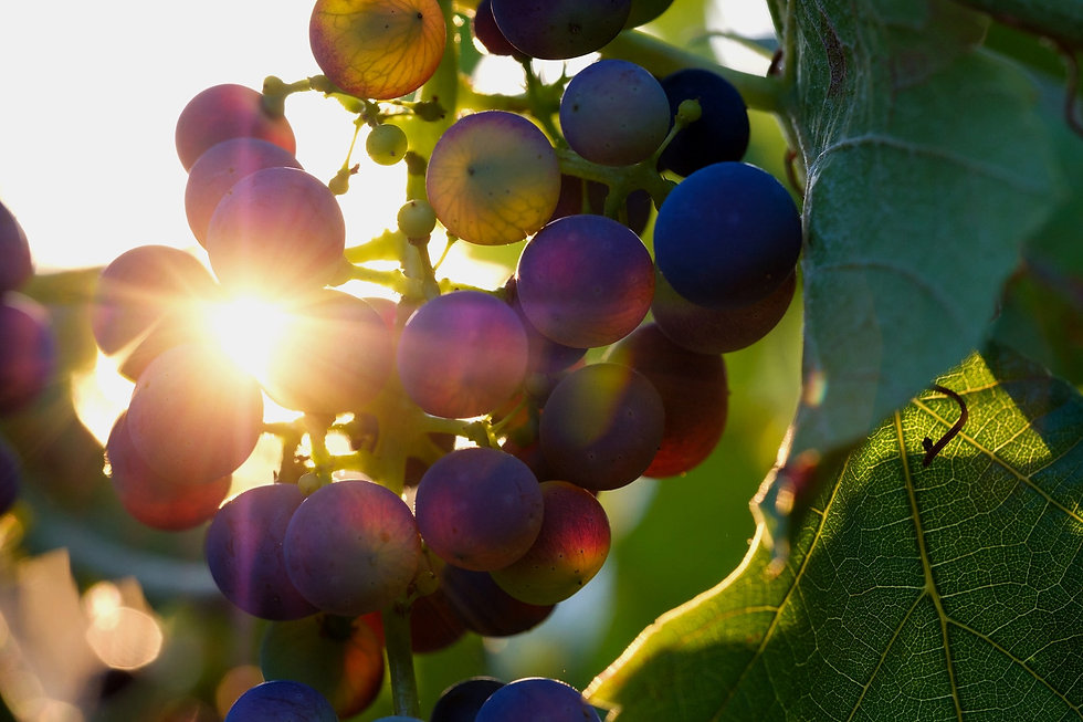 grapes-3550742_1920-min_edited.jpg