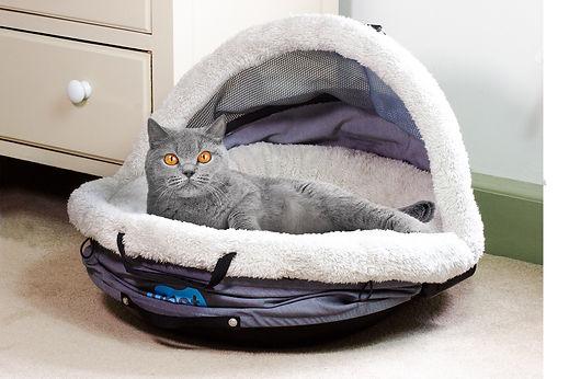 nes&go_grey_cat.jpg