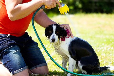 Dogbrush_washing2.jpg