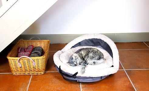 nest&go_cat_understairs.jpg