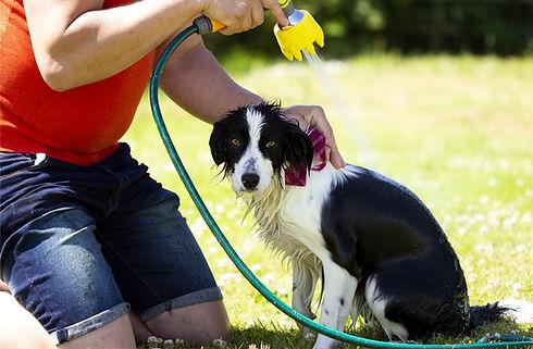 Dog Brush for washing dog