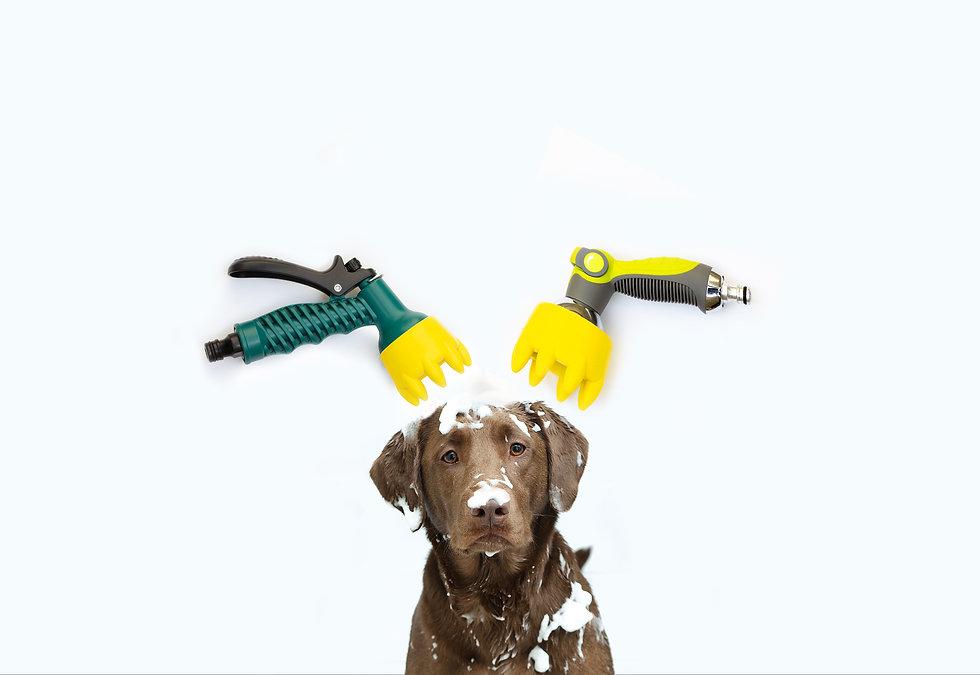 dog-brush-soapy-dog_banner.jpg