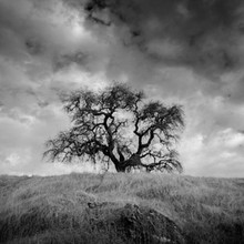 Cal-Tree_0396LR.jpg