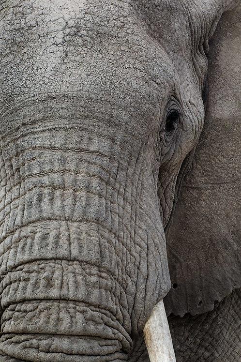 Elephant Close-Up in Amboselli National Park, Kenya