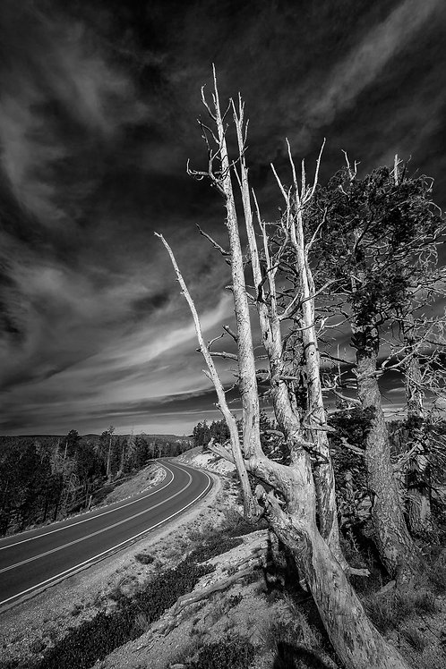 Road in Bryce Canyon National Park, Utah