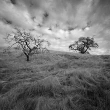 Cal-Trees_0385LR.jpg