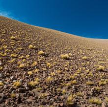 Yellow Field - Puna