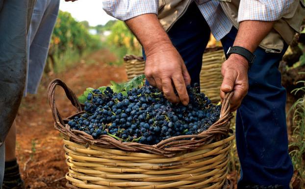 Puglia, tierra de vinos milenarios