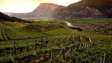 Trentino Alto Adige, donde sopla fuerte el vino !!