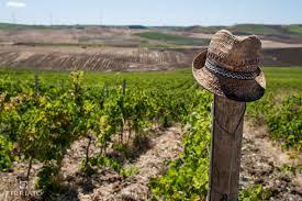 Sicilia, una isla de vino