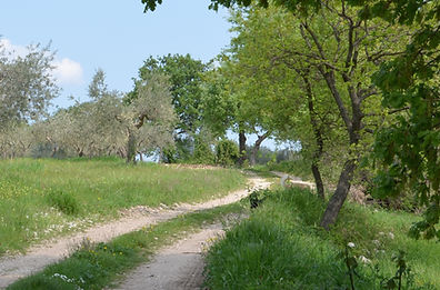 Why not take a stroll in the nearby olive groves?
