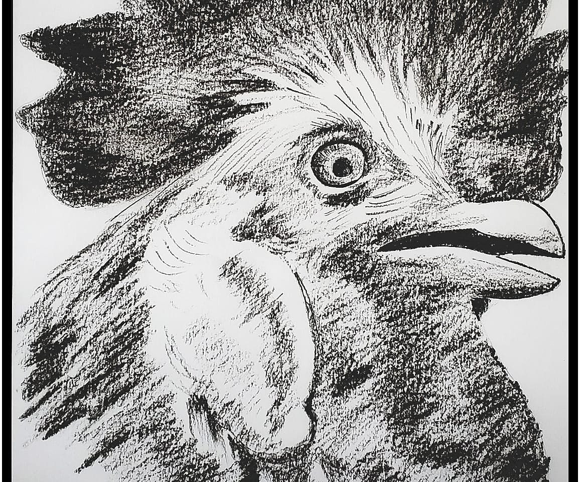 Rooster Closeup
