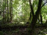 Bosque Nativos Sendero Pozon Verde