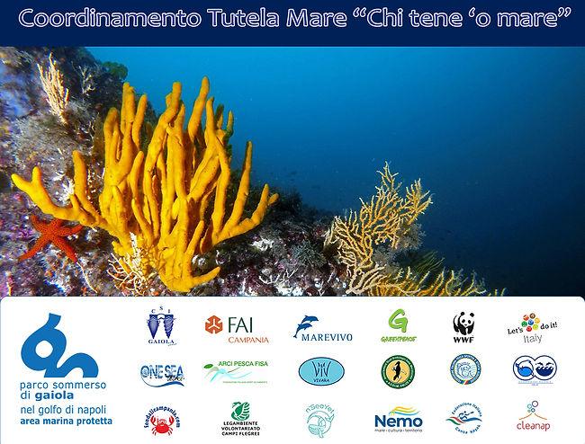 Poster CTM-Axinella2.jpg