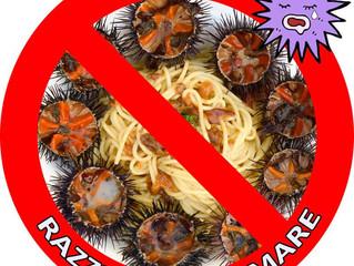 Stop razzia ricci di mare!