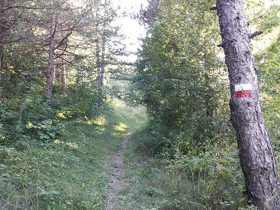 bosco roccaraso.jpg