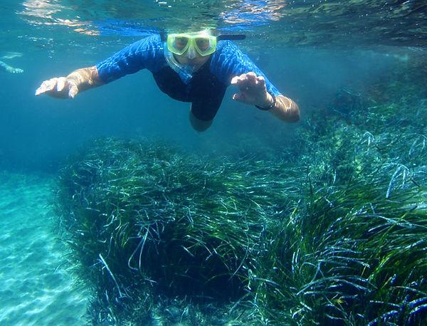 Snorkeling posidonia2_LR.jpg