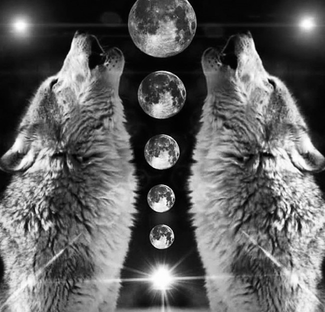 Wild & Witty Wisdom :: Gemini Full Moon