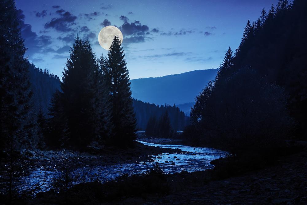 Virgo+full+moon+earth+ether+trees+plants