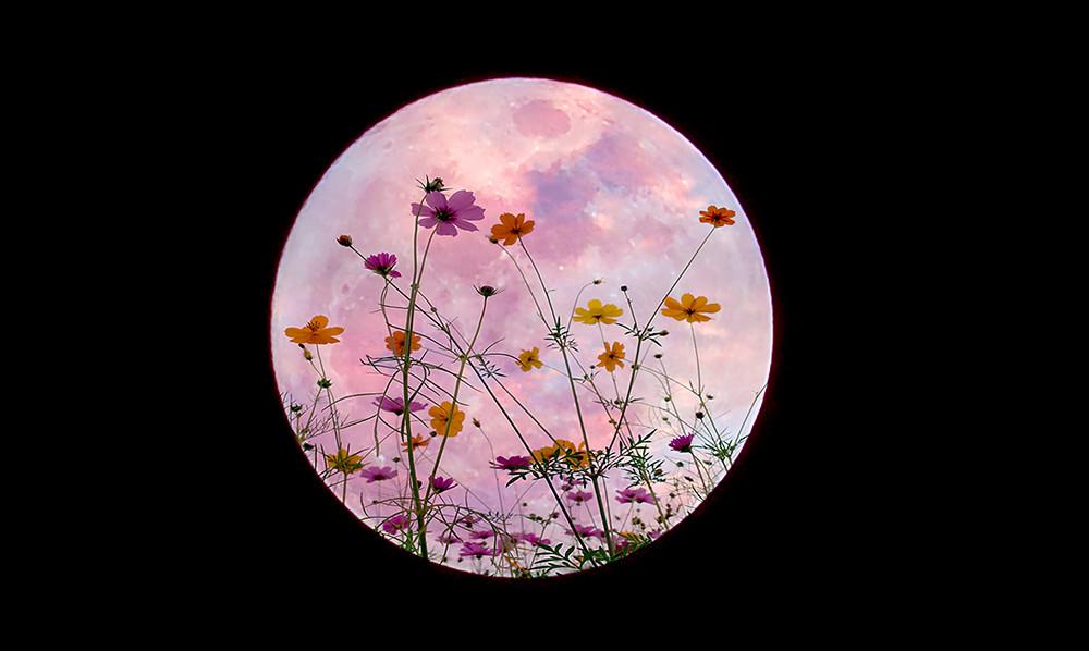 Flower+full+moon
