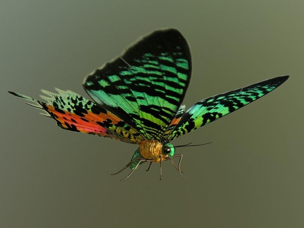 moth+butterfly