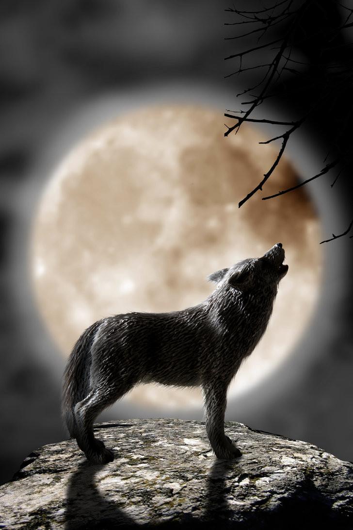full+wolf+moon+hwoling