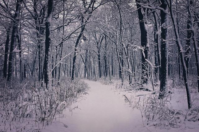 winter+wonderland+saturn+capricorn