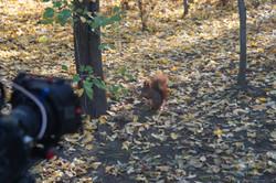 Filmen von Eichhörnchen