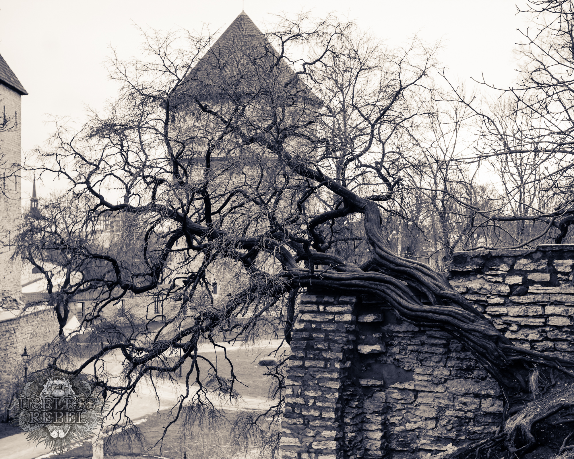 Tallinn, Estonia-tree