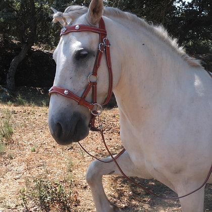 TREKhorse Sidepull Portuguese