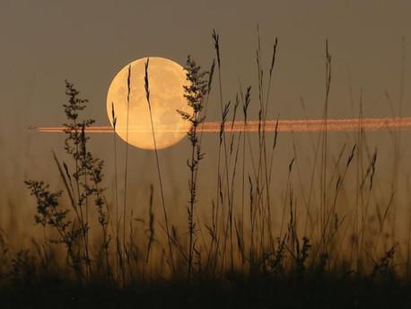 Harvest Moon Ritual