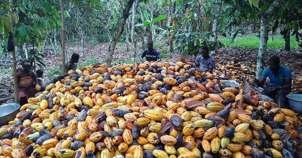 Cacao farmers from Soroano community, Ghana.