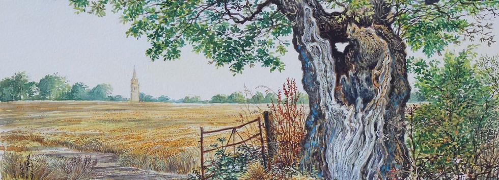 Cook's Oak  30cm x25cm.jpg