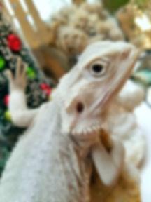 white dragon).jpg