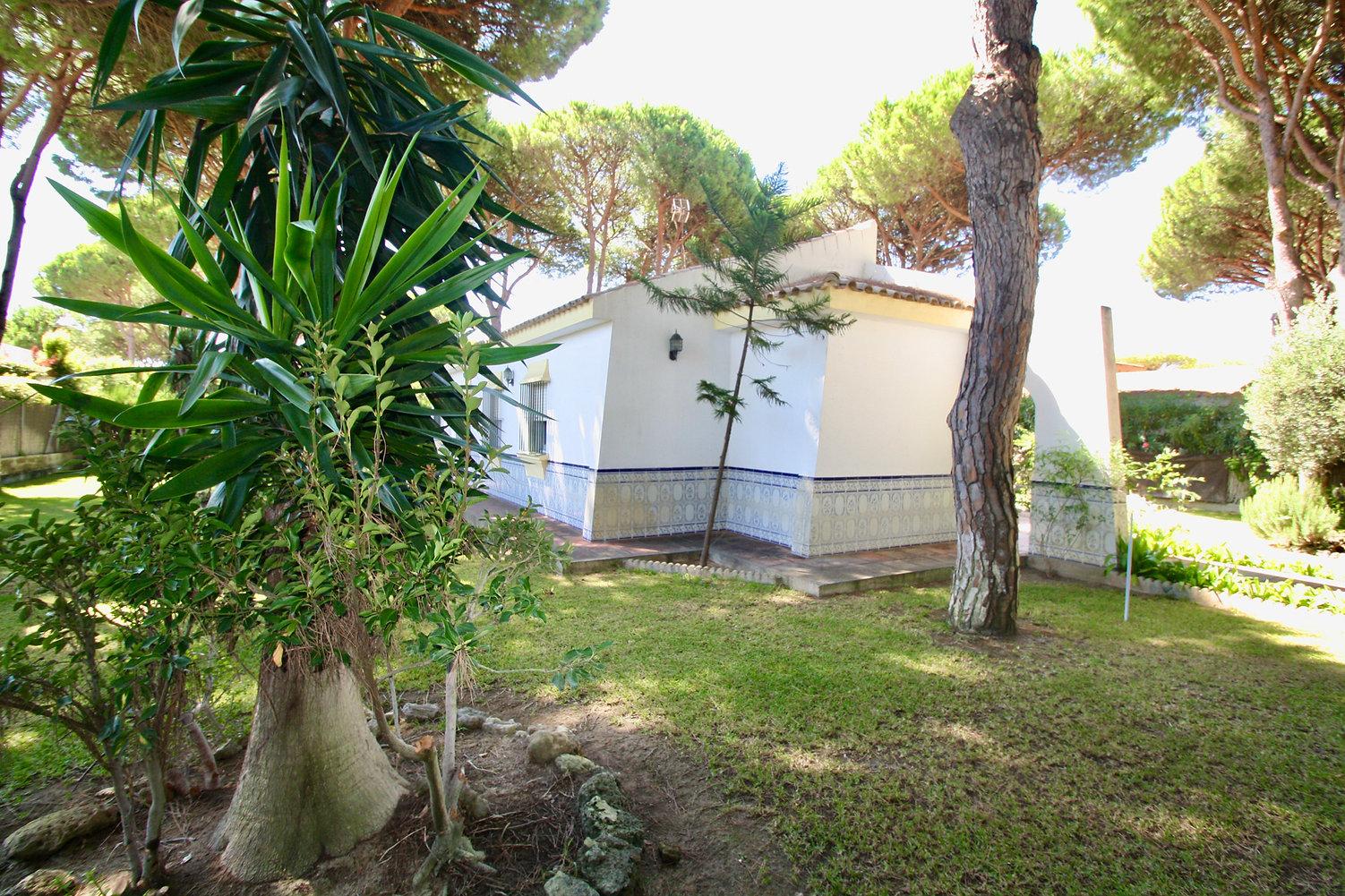 plants-pine-trees-property-plot-refv79.J