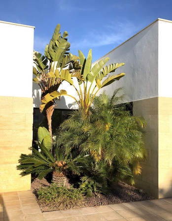 house-plants-palms-ref159jpeg