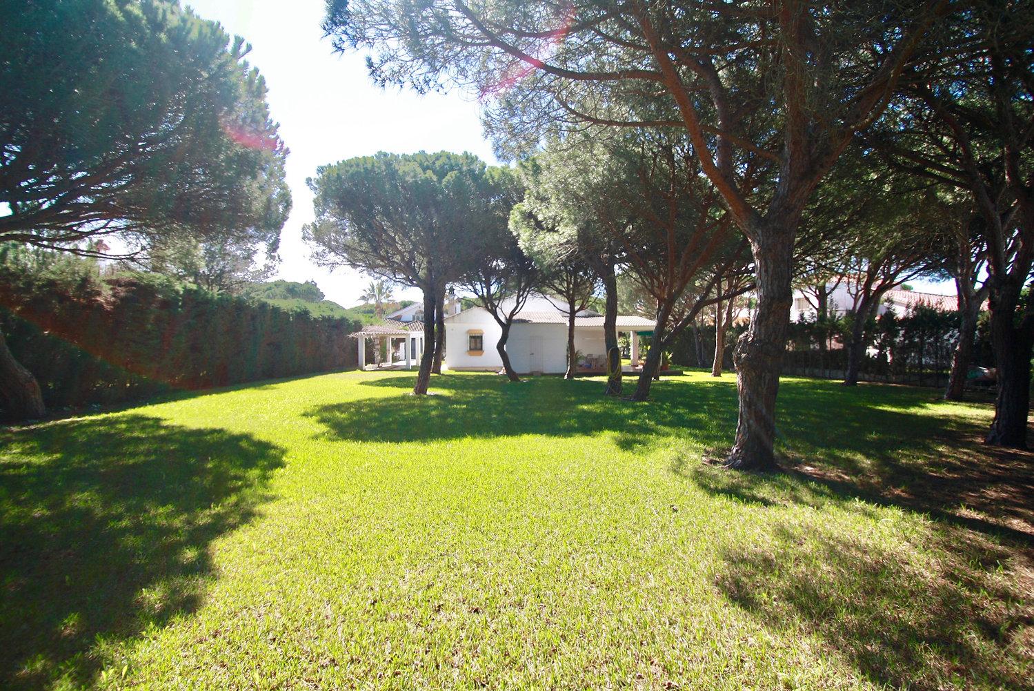 large-garden-house-pine-trees-refv77.JPG