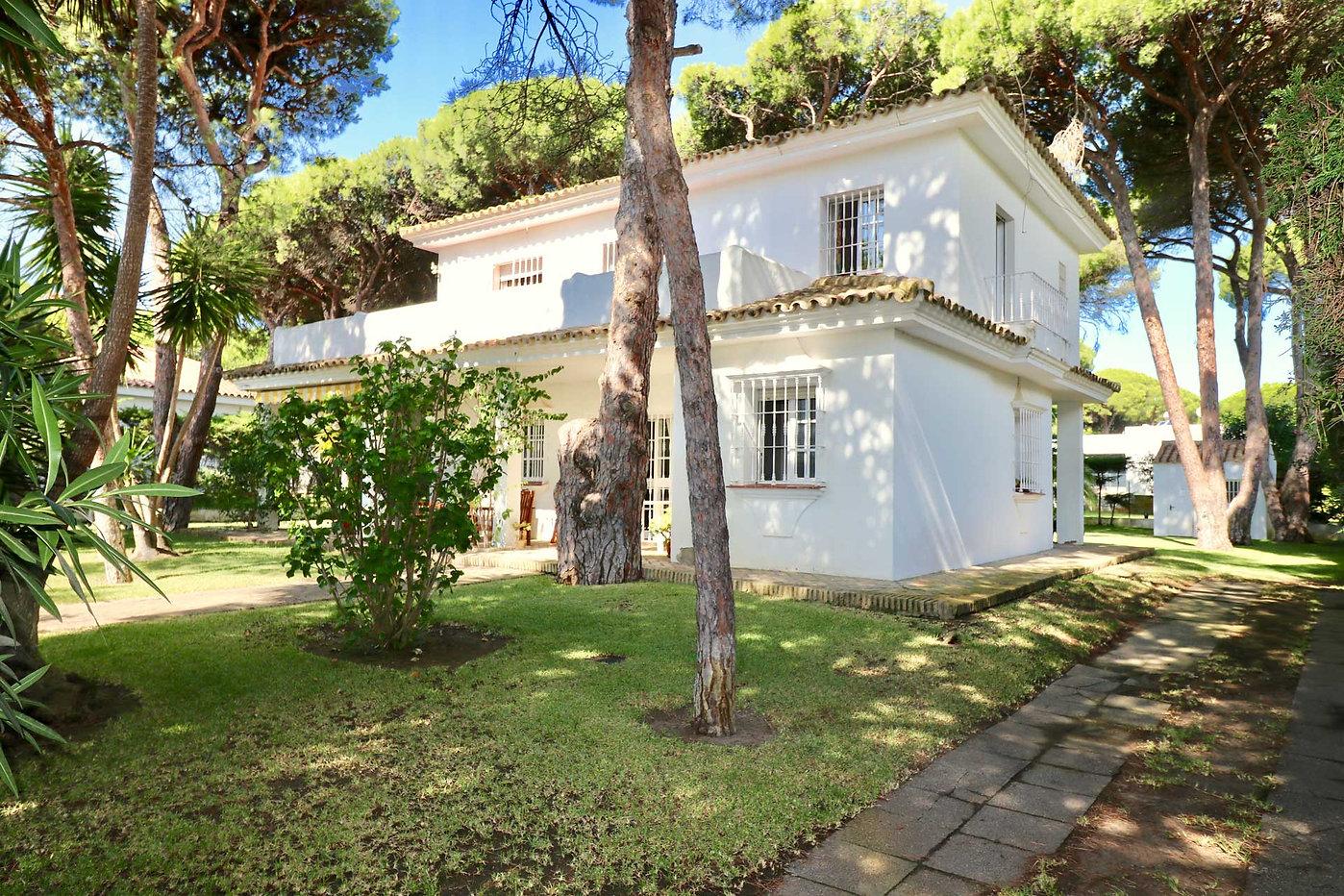 garden-pine-trees-house-roche-refv69.jpg