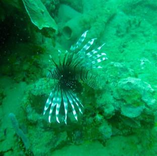 Scuba 6 ECO Diving