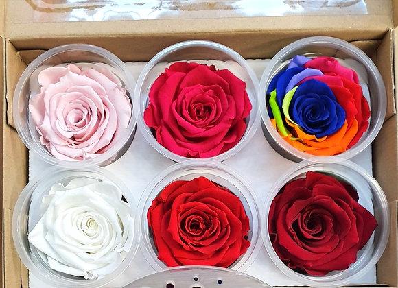 Everlasting Rose