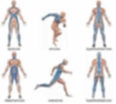 fascial human body.jpg