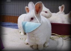Bunnymask.jpg