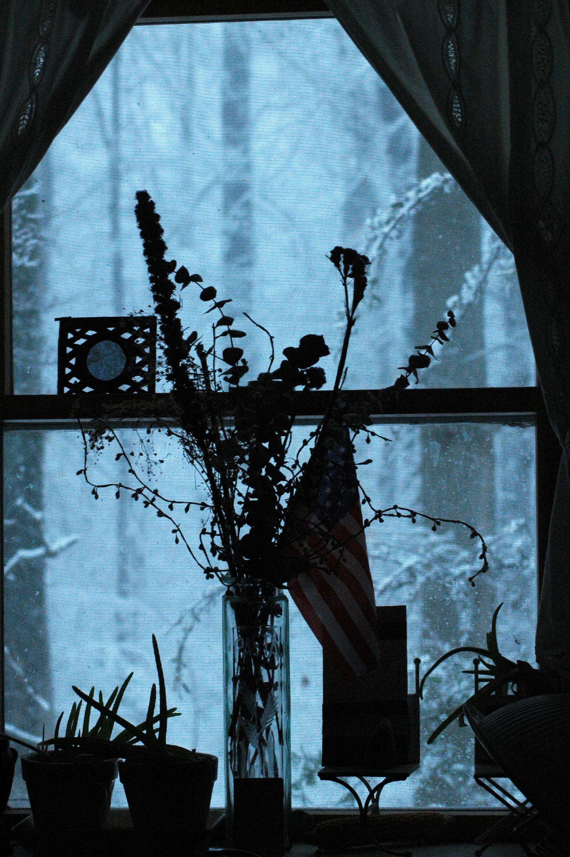 window_8527