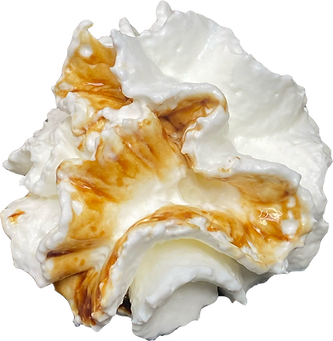 Light Brown Whipped Cream.png