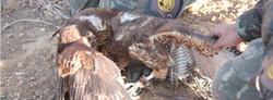 Dia Internacional da Falcoaria - RN