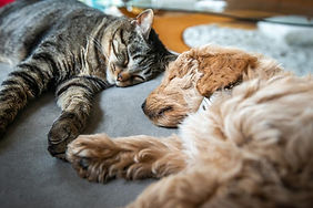 imagedogscat-and-dog-laying-acrossblog.j