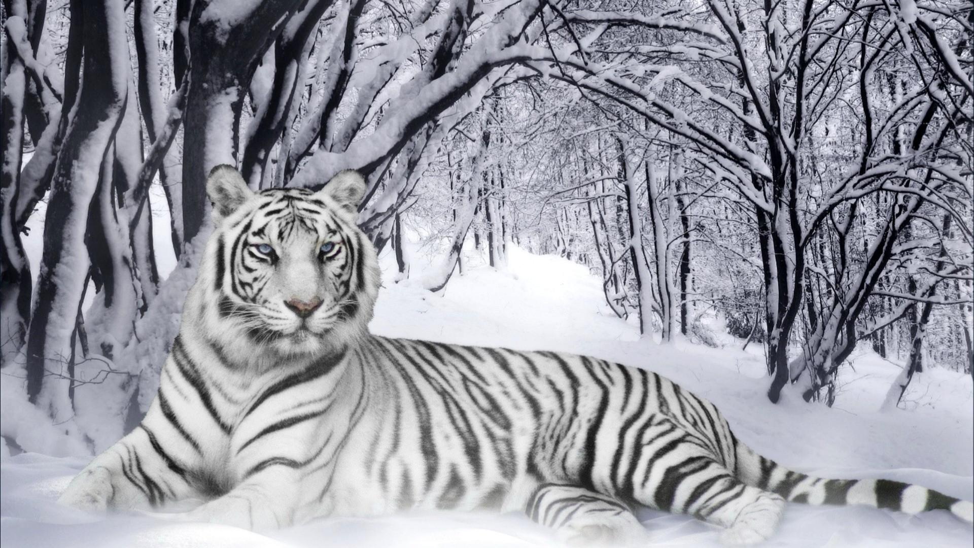 White Tiger Qigong ~11am Fridays PST